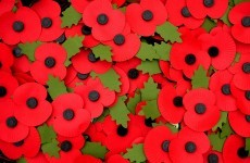poll should we wear poppies to honour the irish war dead