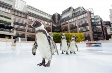 It's Friday so here's a slideshow of penguins from around the world