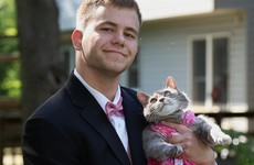 This guy took his cat to prom and became a glorious meme