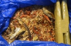 Nearly €100k worth of cannabis found hidden in dried fish