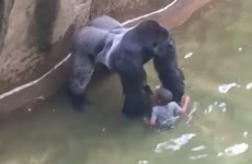 Parents of boy who fell into Cincinnati gorilla enclosure will not face charges
