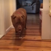 This video of a dog adorably tip toeing past a sleeping cat is going viral on Facebook