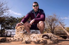One word from Mike Ross and this cheetah would tear you limb from limb