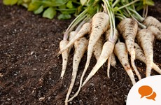 Earthy, homely and tasty: how to grow parsnips for this winter