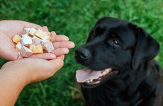 Malicious and cruel: what drives someone to poison a dog?