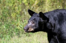 Woman attacked by bear while running New Mexico marathon