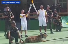 Jaguar used in Brazil Olympic torch ceremony shot dead