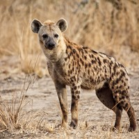 Hyena locks its jaws onto teenage boy's face in South Africa park