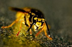 Father of two dies after being attacked by a swarm of wasps