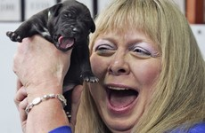 Your beloved dead family dog 'reborn'. Animal cloning is big business