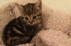 These cute kittens in Phibsboro look like they are getting a brand new home