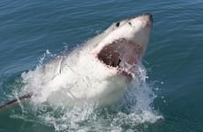 Ballina, Australia: The surf town still reeling from shark attacks