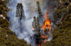 US federal government sues man for $25 million over massive wildfire