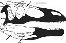 New 80 million-year-old 'giant thief' dinosaur found in Argentina