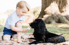 RSPCA forced into warning after Britain's Prince George offers ice-cream to family dog
