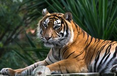 Woman dies after being attacked by tiger at safari park