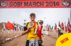 A stray dog followed a runner for half a desert marathon, and now she's getting adopted