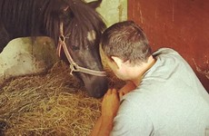 This horse rescue home in Dublin has the most delightful Facebook page in Ireland