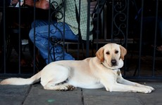 An open-door policy for dogs leaves a lot of businesses in a legal grey area