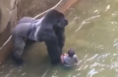 The devoted internet followers of Harambe the gorilla (RIP) have forced Cincinnati Zoo offline