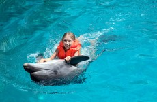 Hawaii's banning people from swimming with dolphins. Tour operators aren't happy