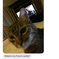 Everyone's loving this family's ridiculous conversation about their cat's nightly routine