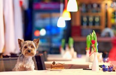Poll: Should dogs be allowed in pubs and restaurants?