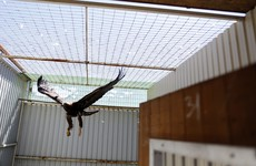 """Project Eagle: Taoiseach to meet with opposition over """"important issues"""" in report"""