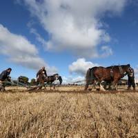 National Ploughing Championships boss: 'I feel as passionate today as when I was 17'