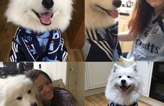 10 pets who are ridiculously excited for the All Ireland final