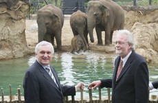 It's part of the furniture but without a Dutchman and Bertie, Dublin Zoo could have shut forever