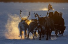 Fears for Rudolph: Russia plans to cull 250,000 reindeer before Christmas over anthrax fears