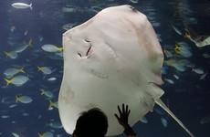 Veteran aquarium diver (62) killed in stingray attack
