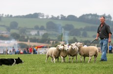 Budget 2017: Low-cost loans and investment for sheep - what's in it for farmers