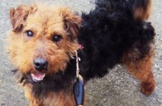 Thieves break into Galway animal shelter to steal dogs