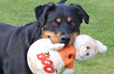 Are you a dog owner? Here's some advice on keeping them safe this Halloween