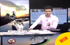 A stray cat crashed a live TV show but the presenter carried on like an absolute pro