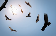 New 20% tax on Irish property funds targets vultures moving assets abroad