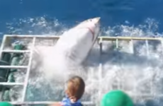 Man who was in metal cage that shark broke into still thinks they're 'beautiful and cute'