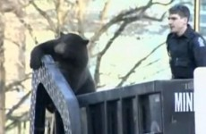 Watch: Black bear hitches a ride on Canadian rubbish truck