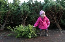 The 12 burning questions* of Xmas: Real tree or fake?