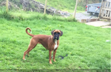 Dog which ran away after its owner was killed at the Dublin mountains has been found dead