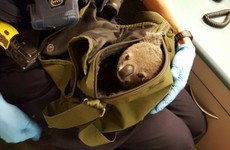 Police in Australia found a baby koala in a woman's backpack, and his name is Alfred