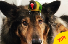 This dog and his bird best friend are the nicest things on Instagram
