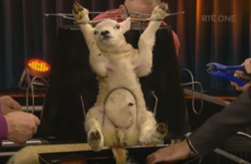 From lamb carousel to Katie Hopkins: 8 times the Late Late Show had people talking this year