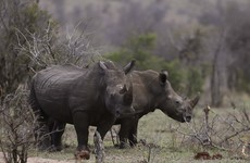 Military veterans back in action saving South African rhinos from poachers