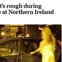 This story about a Carrickfergus goat causing chaos has taken on a life of its own