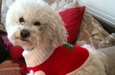 It's Christmas! So here's your pets in festive hats and jumpers
