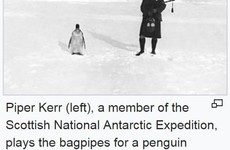 There was a hilarious caption war on this Wikipedia photo of an 'indifferent penguin'