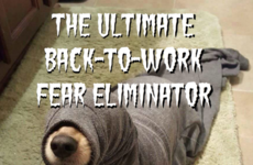 The Ultimate Back-to-Work Fear Eliminator